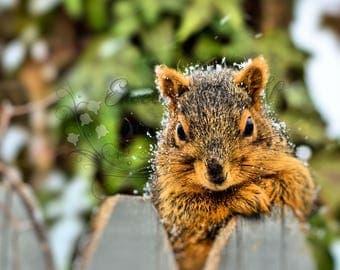 Wildlife Photography, Squirrel Photography, Animal Photography, Nature Photography, Wall Art, Photography Print, Nature Print, Animal Print