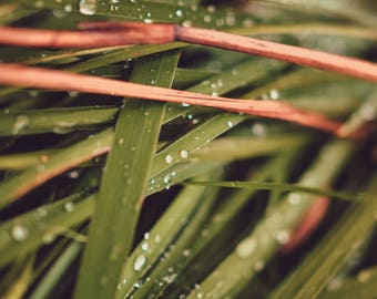 digital photo download, home decor, beautiful, juicy, photo of summer grass