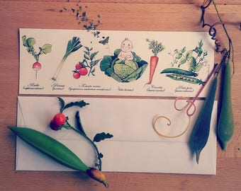 "40 invitations birth ""cabbage"" bookmark on paper 250g"