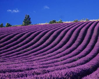 SEMI-rigid PLACEMAT, ORIGINAL design, WASHABLE and durable - Lavender field - classic.