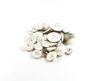 18 to 22 shiva eye shell beads sizes mixed LBP00152