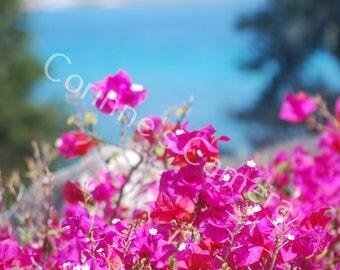 Caribbean  Pink Blank Greeting Card