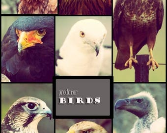 Photo collage, Poster Print, Printing on Matte Paper, Art print, Predator birds, Wall Art, Home decor, Office decor, Gift