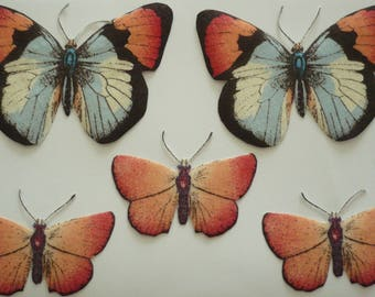 Set of 2 sizes Butterfly magnets