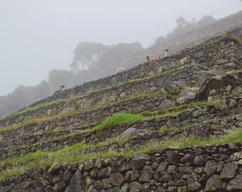 Machu Picchu Photo, Digital Download, Outdoor Photography, Rainy Machu Picchu, Peru Photo, Alpaca Photo, Printable Wall Art, Home Decor, art