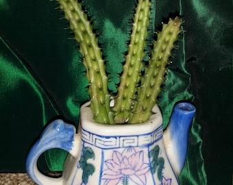 Succulent catcus teapot