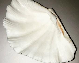 White shell ashtray