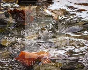Stream Cascading over Rocks and Leaves | Nature Photo Art | Fine Art Photography | Personalization | BDPhotoShoppe | Home Office Decor
