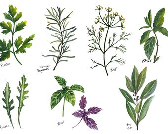 Hand painted watercolor of herbs and spices