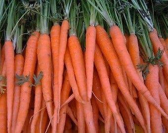 200 Fresh Carrot Tendersweet Seeds