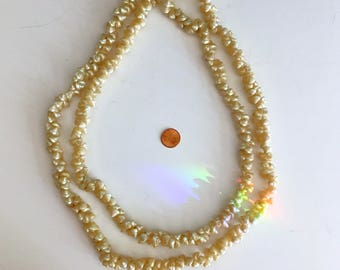 Vintage Nautilus Shell Necklace