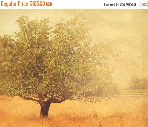 SALE tree photograph, autumn print, rustic home decor, mustard yellow, landscape photo, Los Olives photo, travel photography, wine country a