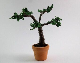miniature fig tree