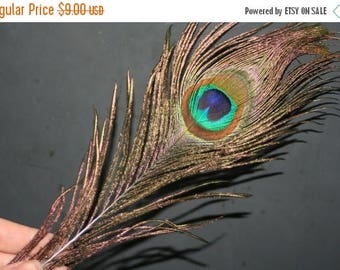 SUMMER CLEARANCE Original Peacock Feather - approx 10 inches long - 10 pcs