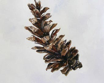 Watercolor Pine Cone Print- White Pine, Eastern White- Botanic Illustration- 8x10- Woodland, Rustic, Forest- Brown, White