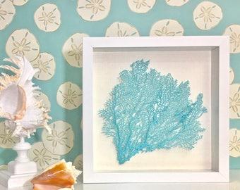 Beach Decor - Framed Natural Seahells or Sea Fan - coastal nautical embellished seashells starfish sealife