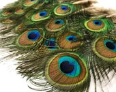 """3-6"""" Peacock Feathers, 10 Pieces - MINI Natural Peacock Tail Body feathers : 110"""