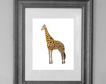 Giraffe Painting Print / Printable Wall Art / Watercolor Safari / Nursery Art / Home Decor / Art