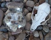 Cruelty Free JUMBO Real Melanistic Black Western Diamondback Rattlesnake Rattler Reptile Skin Shed Glass Ornament. No. 016.