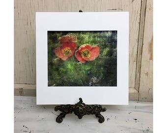 Poppies - fine art print 8x8
