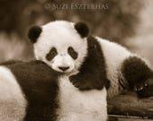 BABY PANDA PHOTO, Sepia P...