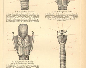 1903 Anatomy of the Larynx or Voice Box Original Antique Engraving