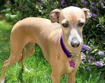 Custom fit Italian Greyhound Purple Velvet ID / Tag Collar - measurements essential, identification collar - iggy collar - iggy tag collar
