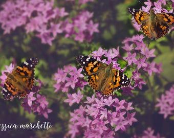 butterfly wall art, butterfly decor, monarch butterfly, butterfly art, butterfly print, nature photography, fine art photography, wall art