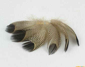 20 Pieces Brown Feather 5-8cm (YM410)