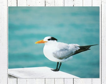 Coastal Seabird Photography | Aquamarine Beach Photography | Shore Birds  | Teal Wall Art Blue, White, Grey, Yellow Nautical Bird Art Prints