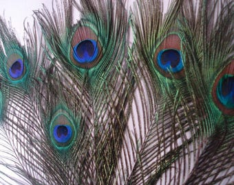 Natural Peacock Feathers, Peacock Feathers, Natural Peacock Feather, Natural Peacock Tail, Peacock Feather, DIY Project Feathers, Peacock