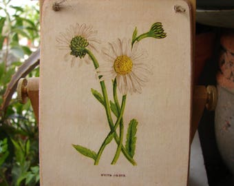 vintage,botanical,ox eye daisy plate or label applied to natural wooden tag, dresser, door hanger, gift ideas