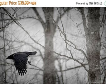 ON SALE Crow Fine Art Photography, Crow Home Decor, Print, Bird Flying in the Forest, Unique Nature Print, Dark Foggy Forest, Flying Crow