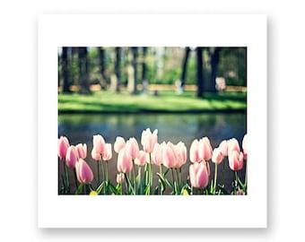 Flower photography, large wall art, large art, pink wall art, pink art, canvas art, canvas wall art, nature photography, Keukenhof, tulips
