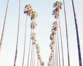 Los Angeles Photography, Palm Tree Photography, California Bohemian Wall Art boho chic print pastel blue beach photography 40 x 60