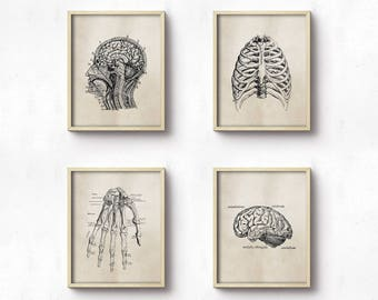 Anatomy Art Prints - Office Art - Medical Student Graduation Gift - Set Of Four - Science - Doctor's Office Decor - Brown Neutral - SKU:8927