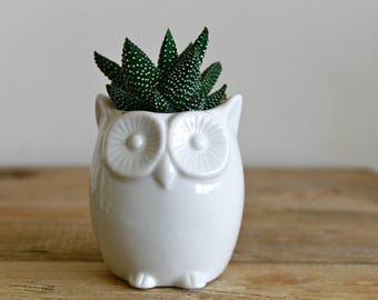 Ceramic Owl succulent planter-Mini Owl pot-Pottery Owl Planter-Owl cactus planter-white Owl pot-owl decor