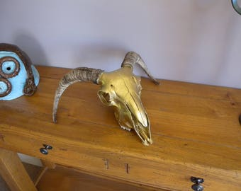 Brass Finish Sheep Skull with Horns