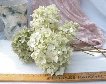 Dried hydrangea flowers- 9 large mopheads in shades of green and white-  Spring flowers- cottage chic wedding flowers