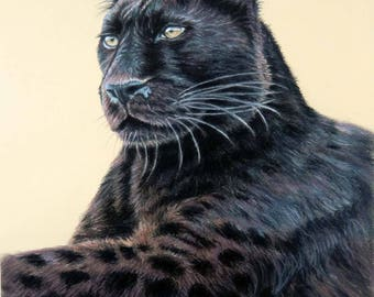 Panther Jaguar - Fine Art Print