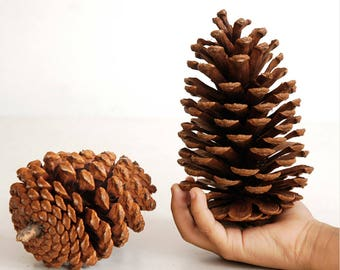 8 pcs Giant Pine Cones - Rustic Wedding Wooden Wedding Decors, Table Centerpiece, Party Banquets Table Decors