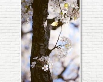Cherry Blossoms Print - Botanical Art Print, Cherry Tree Print, Flower Art Print, Boho Wall Art, Oversize Art, Big Wall Art, Tree Wall Art