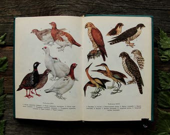 Birds - 62 Beautiful Colour Plates - Hardcover -- Vintage Ornithological Book, 1983. Zoology Nature Drawings Illustrations Art Print