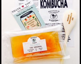 """LARGE 4"""" Kombucha SCOBY + 1.5 Cups Starter Tea, wooden spoon, instructions, One Gallon Batch, Perfect Christmas gift for kombucha lover"""