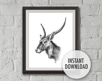 Instant Download Antelope Print, Printable Vintage Illustration - Waterbuck, Pure White, 8x10,  Wall Decor, Wall Art Print, Drawn in 1899