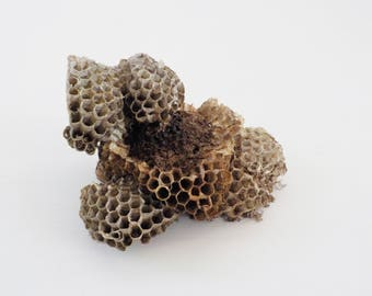 Natural Paper Wasp Nest • Natural Taxidermy Craft Supply Prop • Dried Used Wasp Nest Specimen