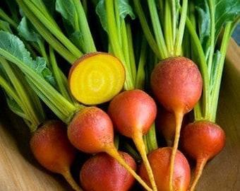 Beet Seeds - Organic Beet Seeds - Yellow Beets - Touchstone Gold Beet Seeds - David's Garden Seeds