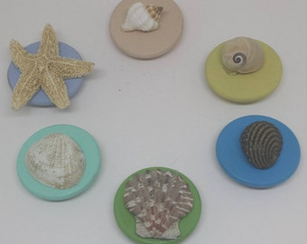 Set of Six Mixed Seashell Magnets