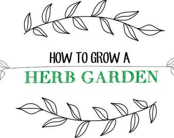 How To Grow A HERB GARDEN Vegetables Herbs Planter Box EVERYTHING You Need To Know