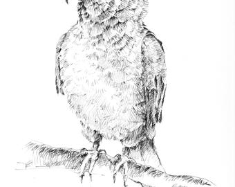 Lovebird sketch, parrot pen and ink, bird black and white, love bird illustration, original sketches, parrot wall art, lovebird drawing